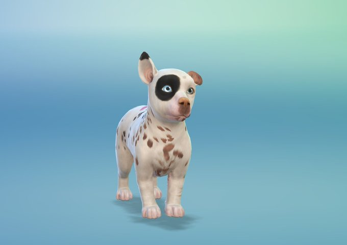 Vixella Sims  Cats And Dogs
